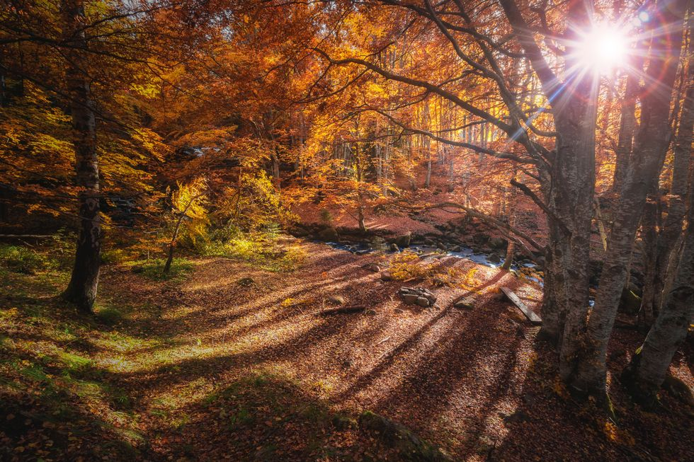 10 Signs That It Is Almost Fall