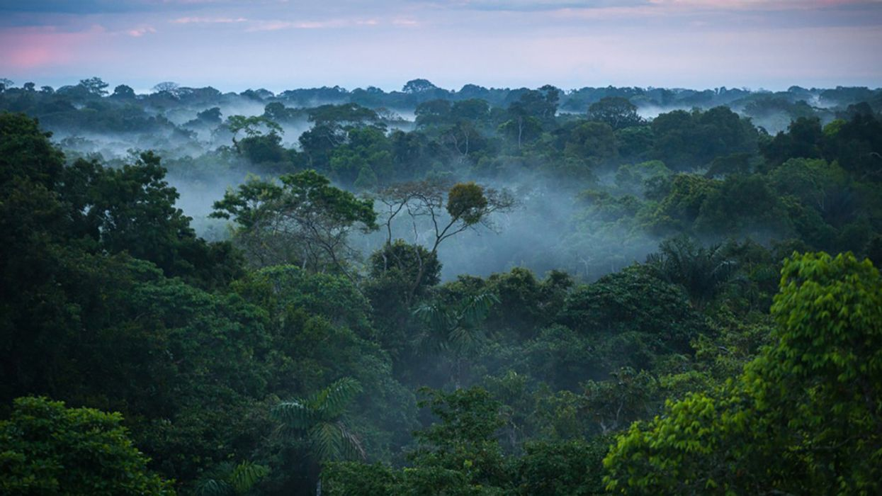 Amazon Deforestation in Brazil: What Does It Mean When There's No Change?