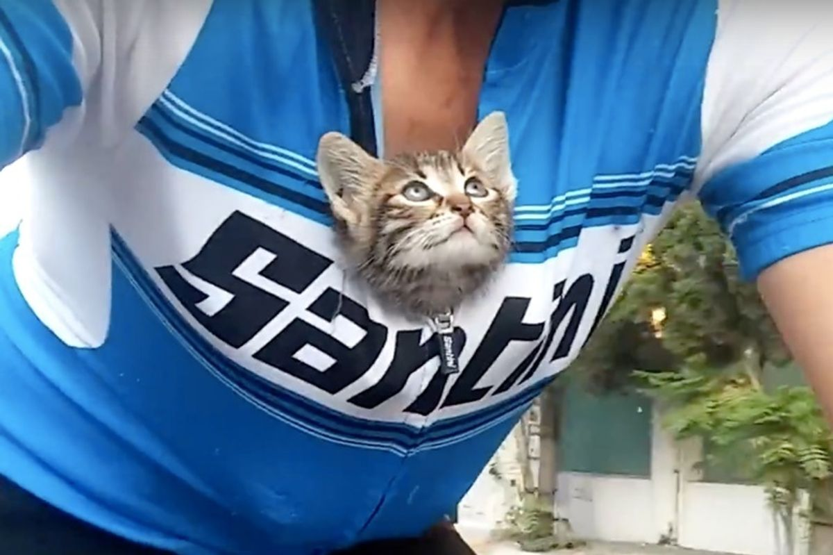 Abandoned Kitten Ran Up to Cyclist for Help - He Couldn't Leave Her