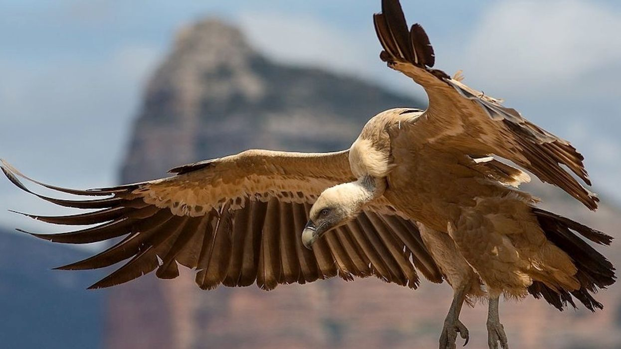 52 Percent of World's Birds of Prey Populations in Decline