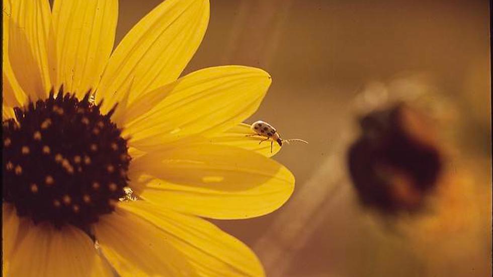 Solar Trap: Chemical-Free, Solar-Powered Pest Control