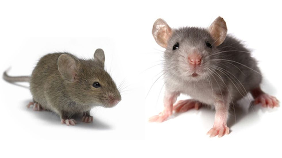 Harvard Scientists Claim to Reverse Aging in Mice
