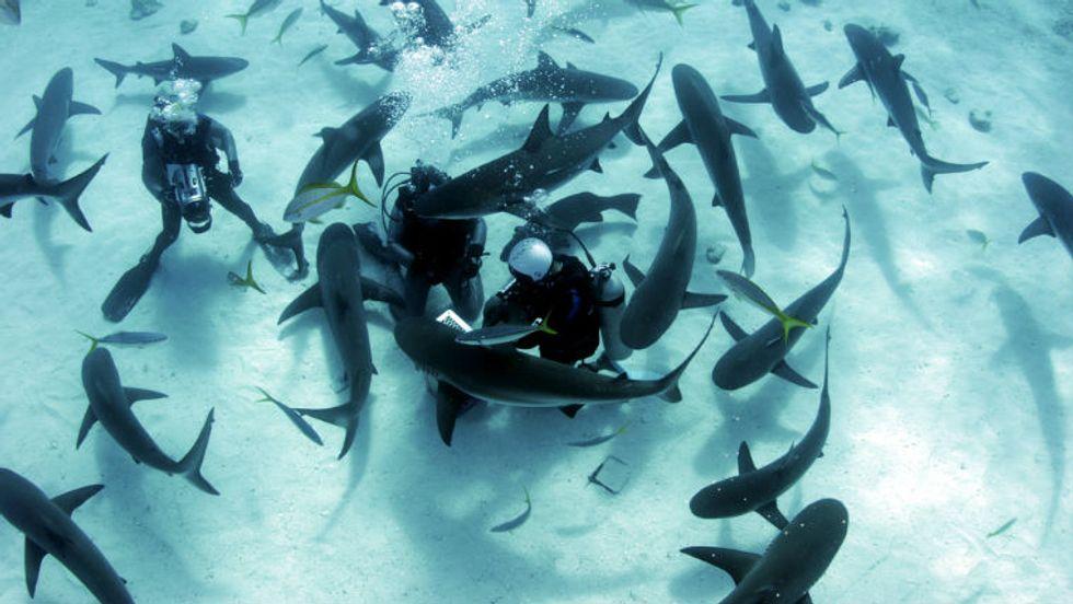 Joi Ito's Deep Dive