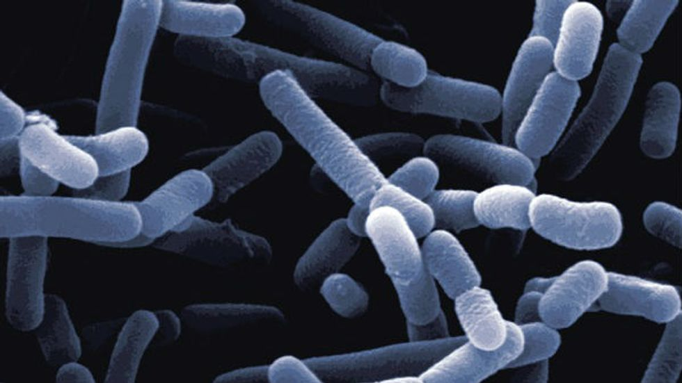 Bacteria, I Want You Back: Five Friendly Microscopic Creatures In Your Body