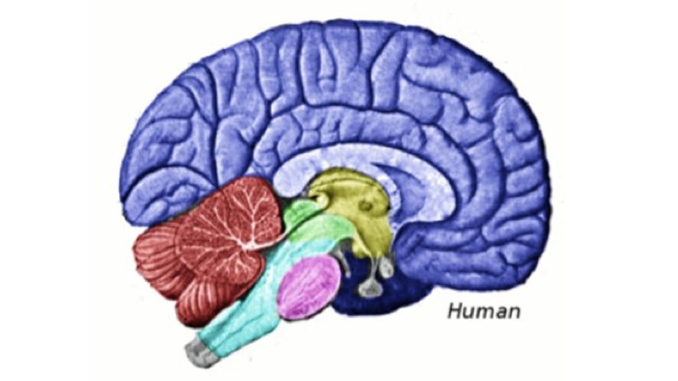 Study: The More Altruistic You Are, The Bigger Will Be This Part of Your Brain