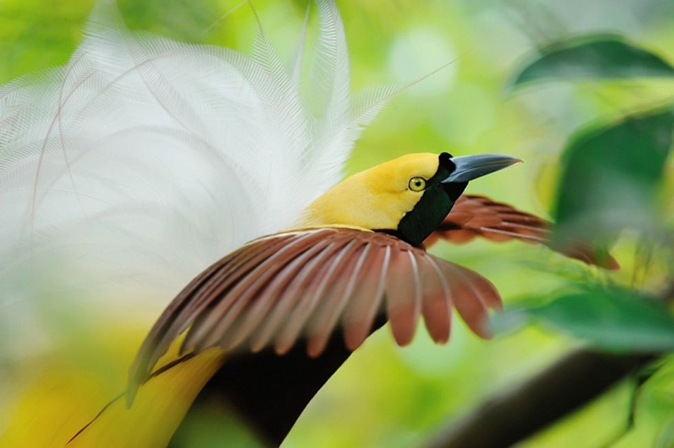 More Birds Are Becoming Extinct
