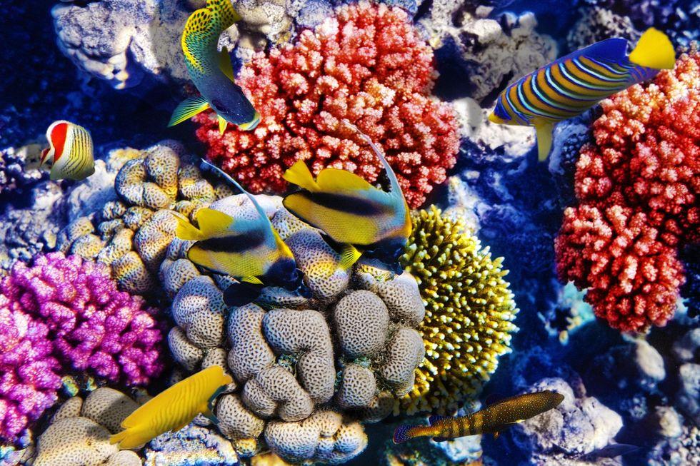 Coral Reefs: Nature's Underwater Pharmacies
