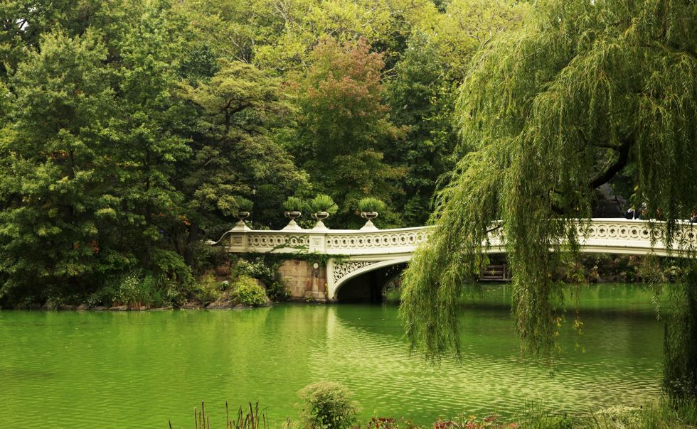 Green Spaces Help You Live Longer