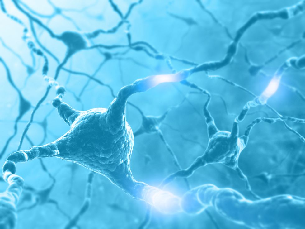 Scientists Prove New Neurons Grow in Adult Brains