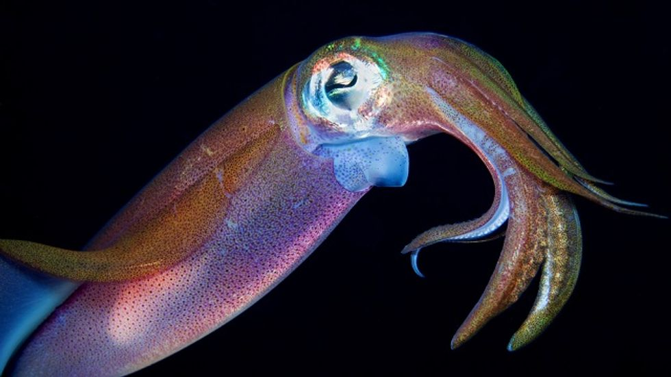 Night Vision Camouflage, Inspired By Squid