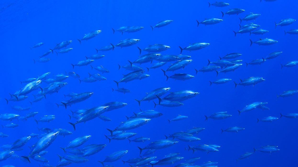 Climate Change Could Ignite 'Fish Wars,' But It Doesn't Have To