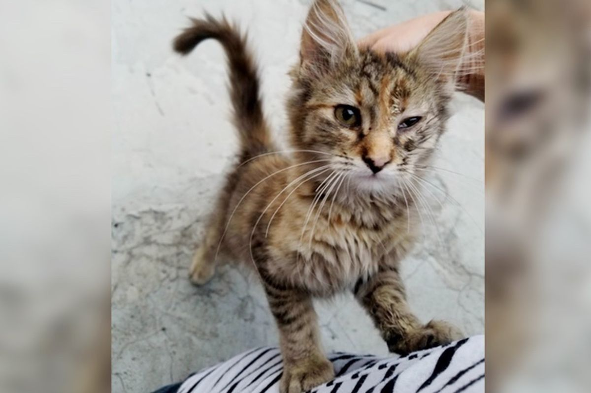Kitten Found Under Street Lamp Stops Crying and Starts Purring When She Finds Someone to Love