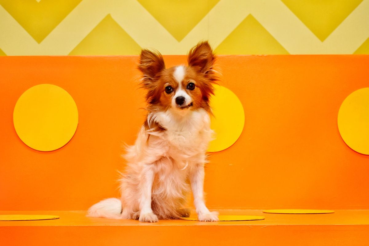 Human's Best Friend Is a Colorful Pop-Up for Your Pup