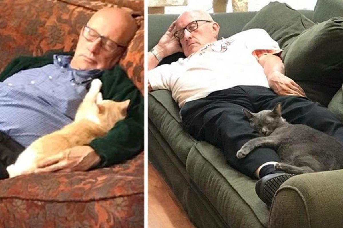 Grandpa Comes to Shelter to Brush Cats and Kittens and Falls Asleep with Them Every Day for 6 Months