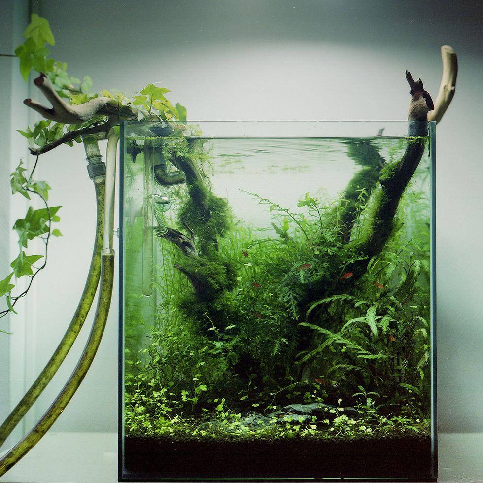View of a desktop aquarium
