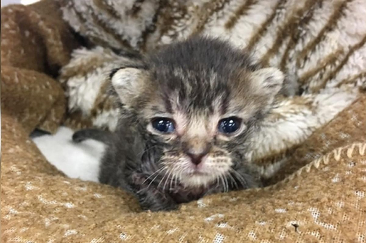 Kitten Found on Hot Asphalt, Beat the Odds When No One Knew He Would Survive