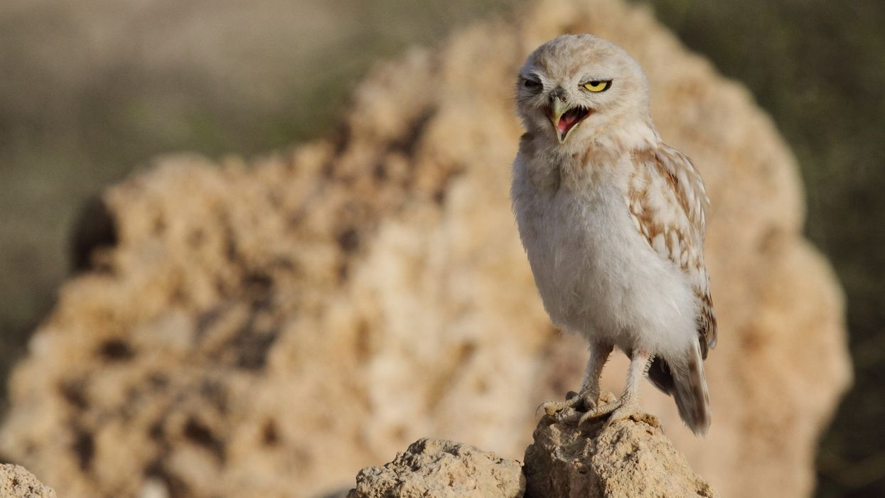 New blood test can tell if you're naturally a night owl or an early bird