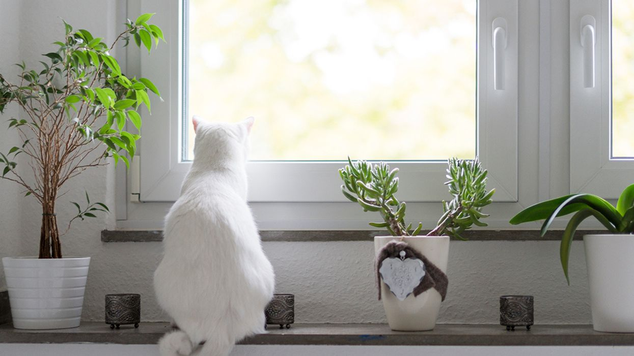 7 Science-Backed Health Benefits of Having Plants at Home