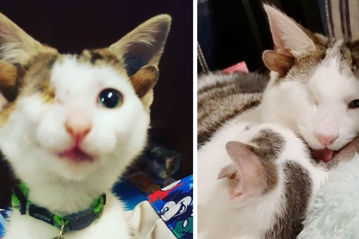 Rescued Kitten with 4 Ears Meets His Little Brother Who Also Has Extra Ears, for the First Time