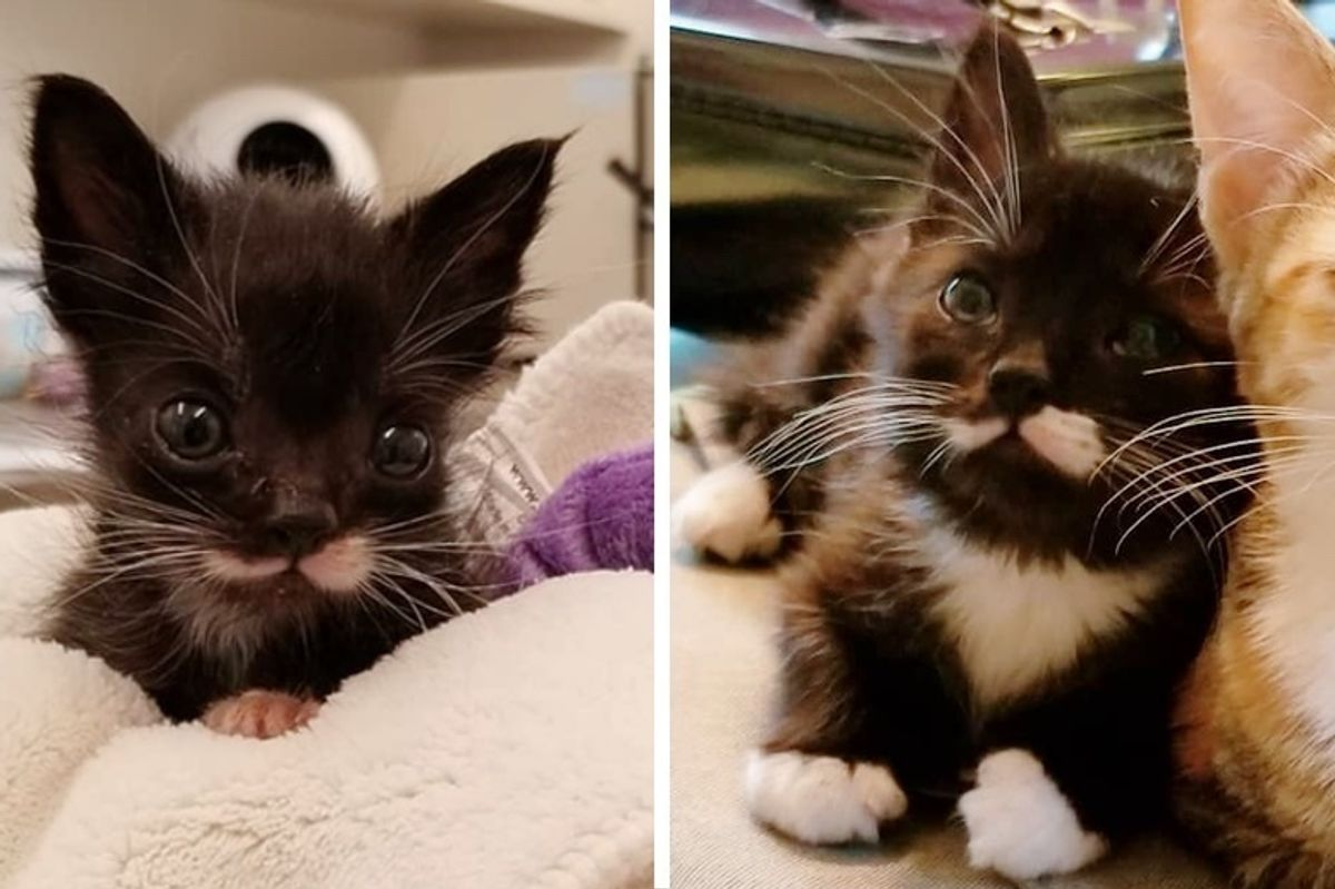 Kitten Who Couldn't Grow, Found Someone Who Never Gave Up on Him