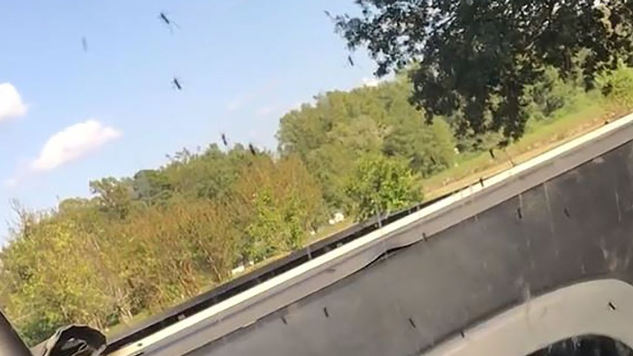 Giant Mosquitos Swarm North Carolina