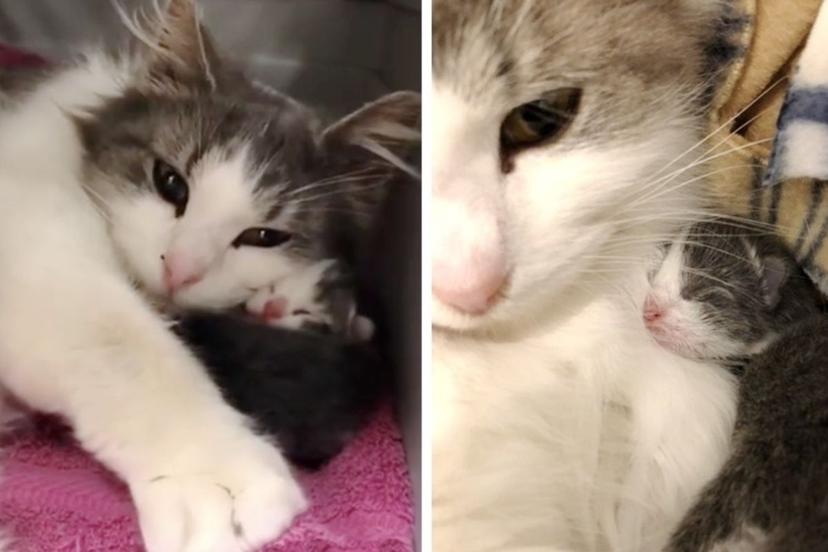 Deaf Cat Mom Gets Help for Her Surviving Kittens and Can't Stop Purring