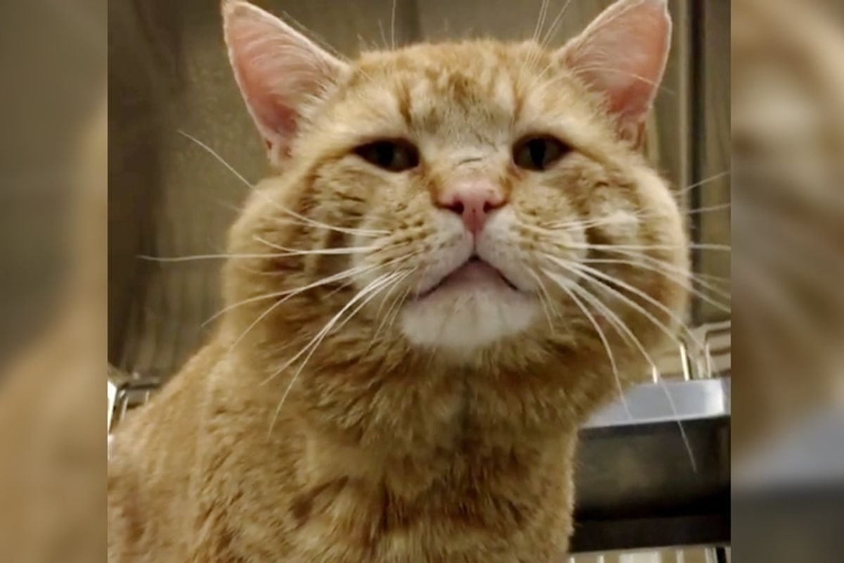 Cat with Squeaky Meow Finds His Purr-fect Match After Living on the Streets for Most His Life.
