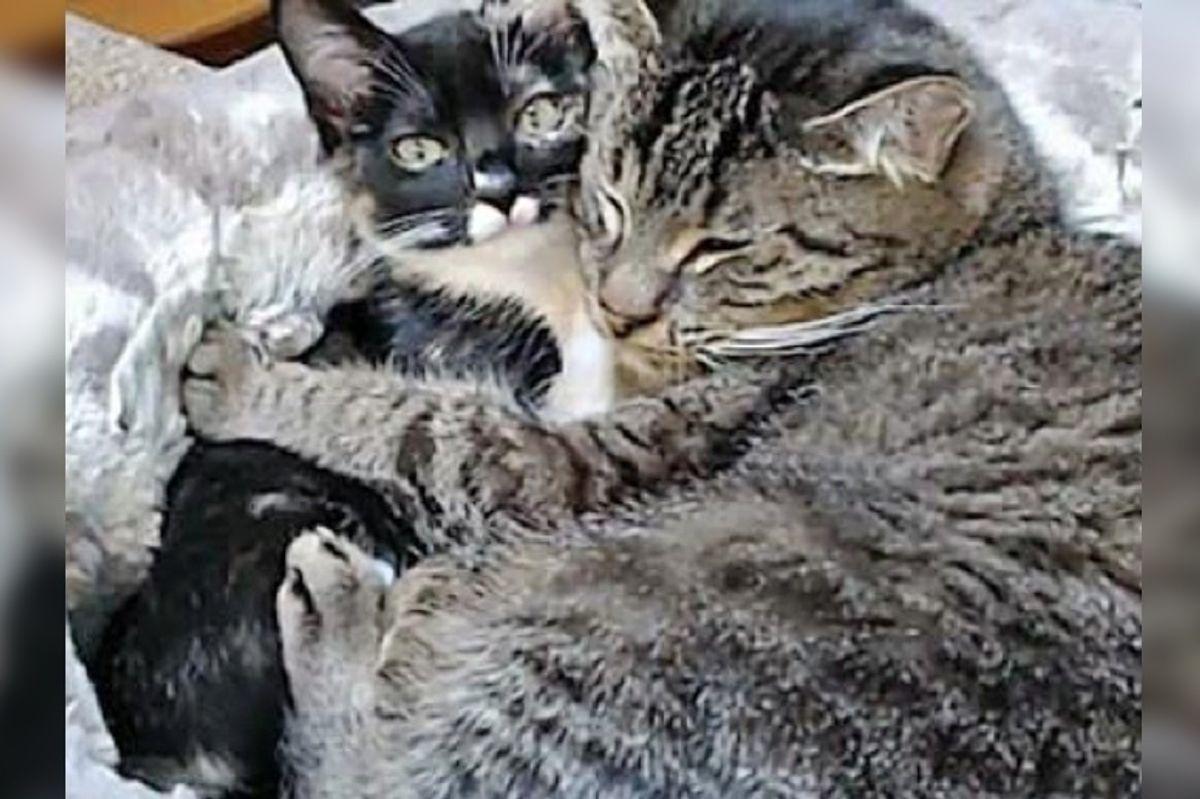 Grandpa Cat Has a Feline Admirer Who Follows Him Around for Snuggles