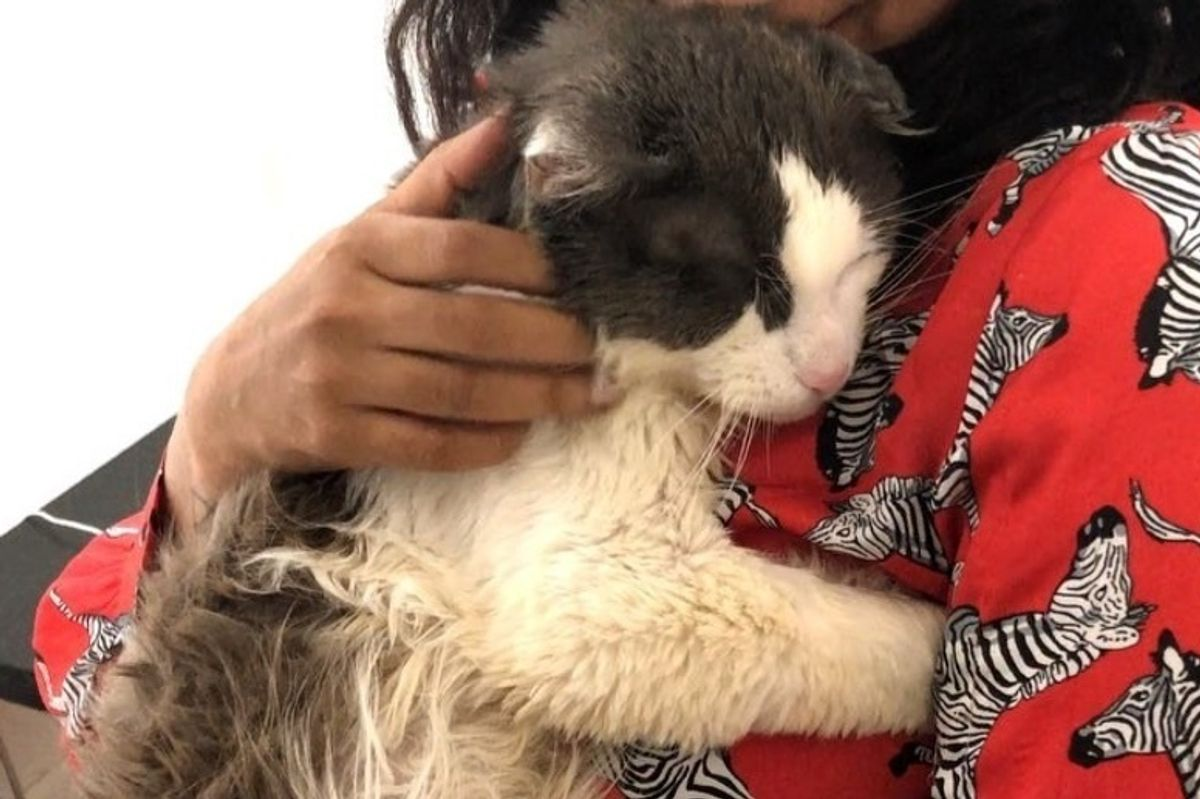 Scraggly Street Cat Walks into Carrier for Help and Can't Stop Cuddling His Rescuers
