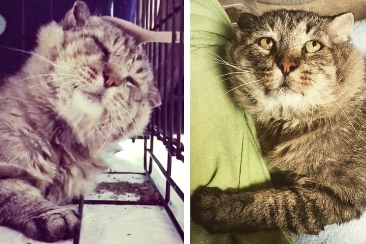 Cat Finds Love After 10 Years Living as Feral, He Can't Stop Cuddling