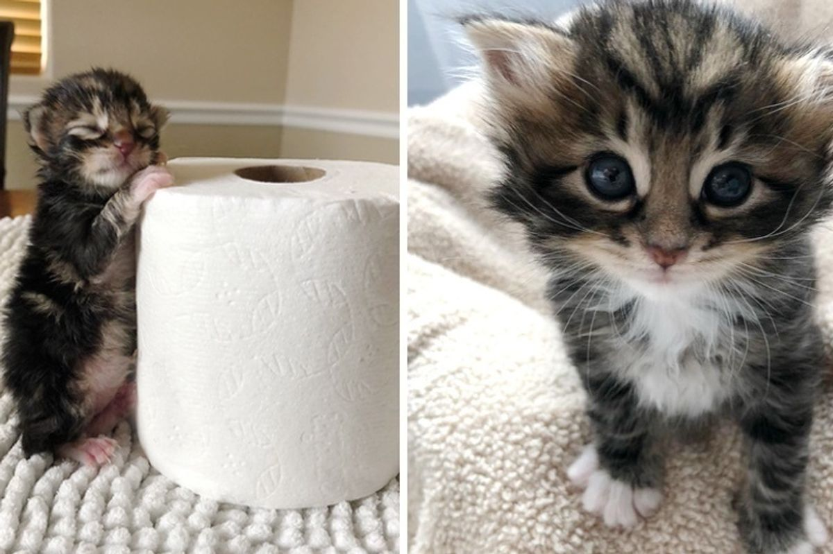 Kitten Found Abandoned in a Bush Just Hours Old, Has Her Life Turned Around by Loving Couple