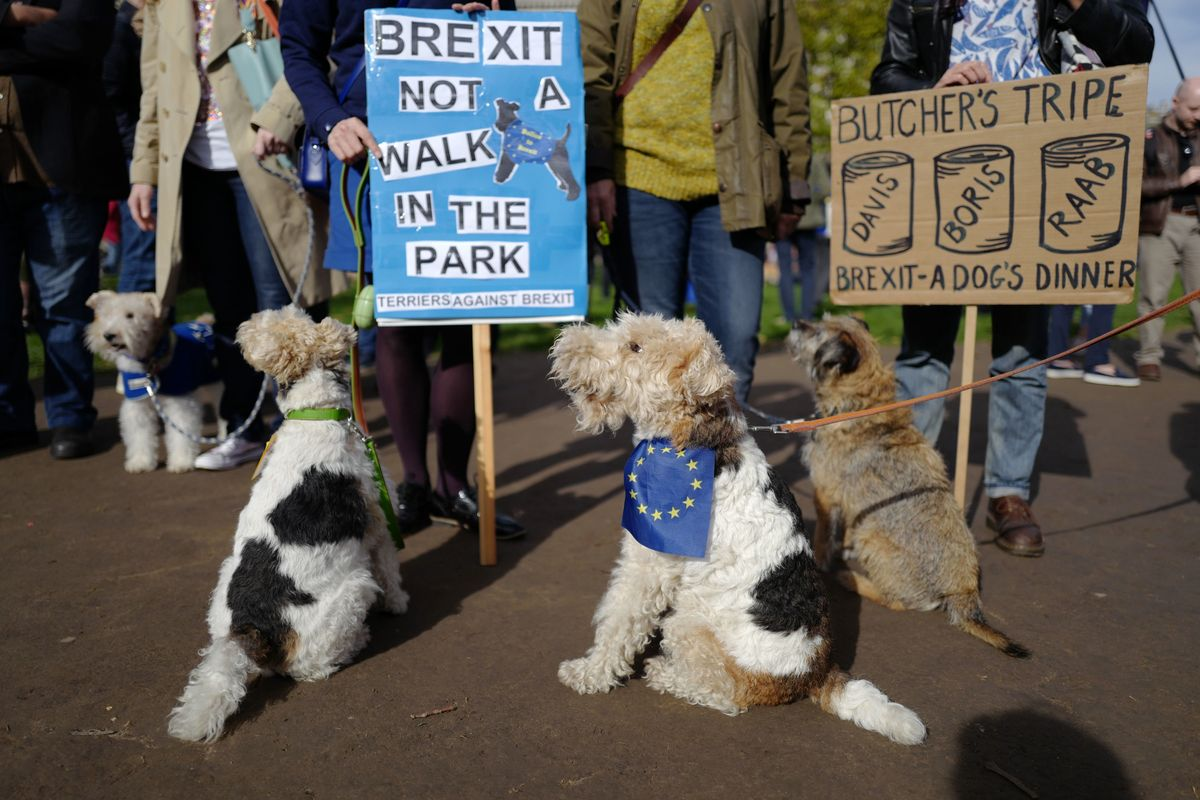 Hundreds of Dogs Marched in London to Protest Brexit