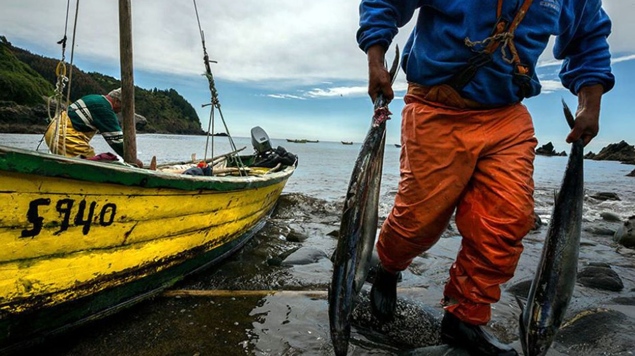 Can a Locavore Seafood Movement Save Chile's Traditional Fishers?