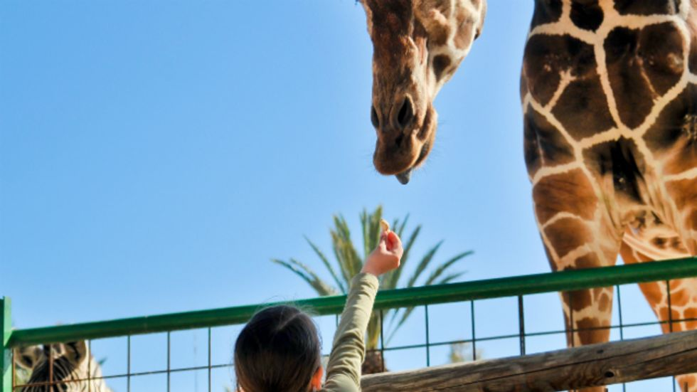 Is animal captivity wrong?