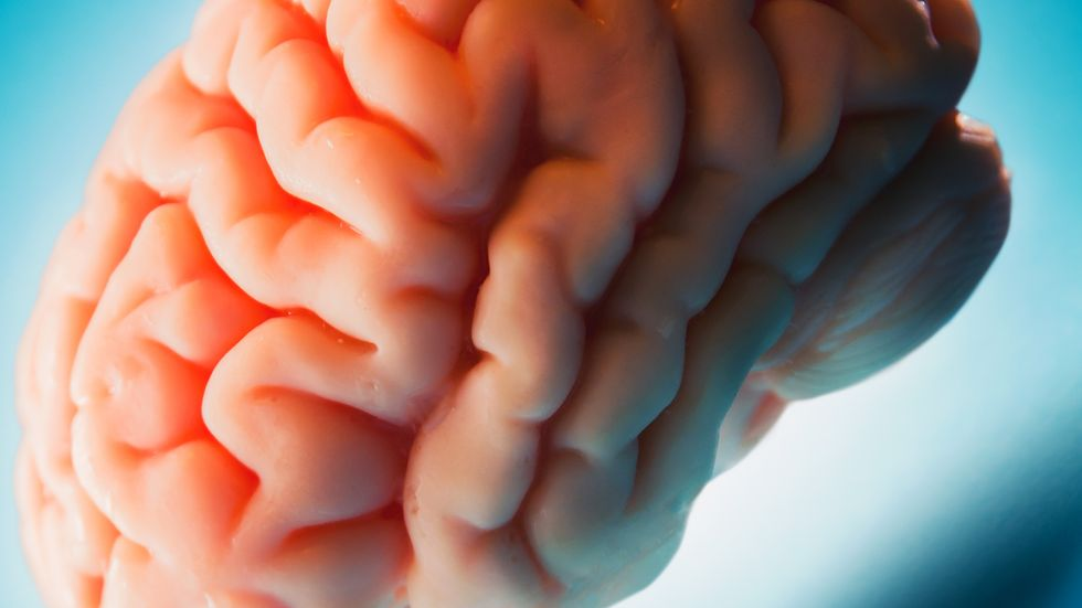 How Common Myths About the Human Brain Can Be Dangerous