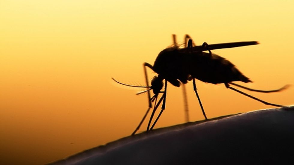 Why Mosquitoes Evolved to Like Us