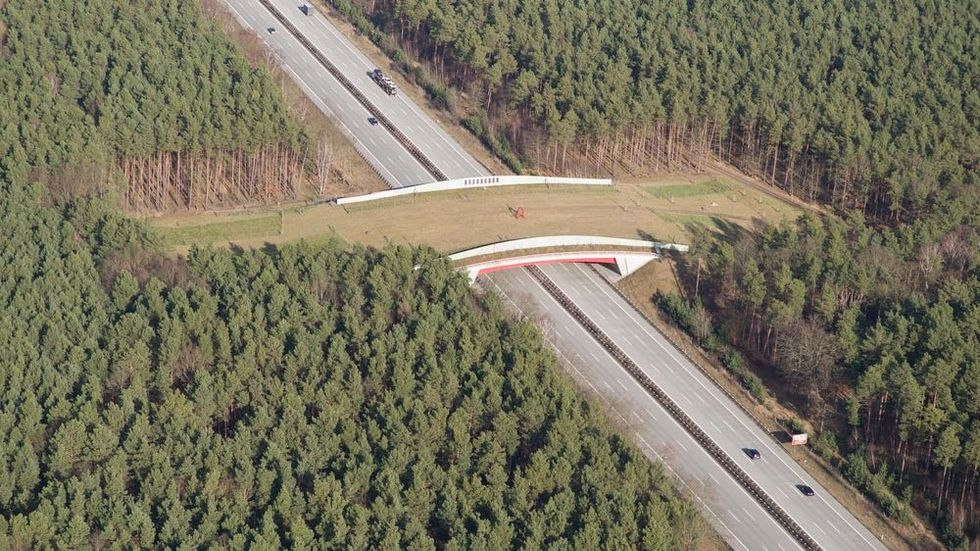 Land Bridge Gives Animals Right of Way on Roads