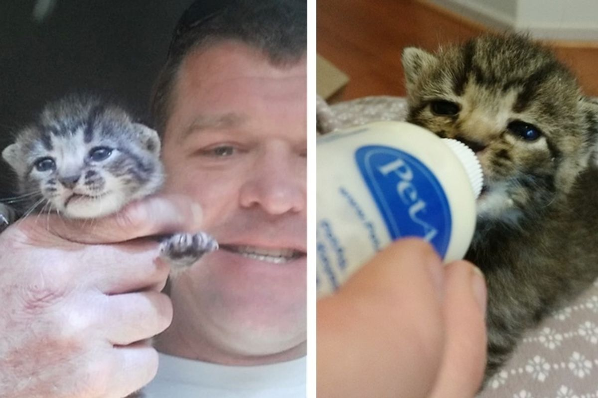 Man Saves Kitten from Run-down Building Before Approaching Hurricane Arrives