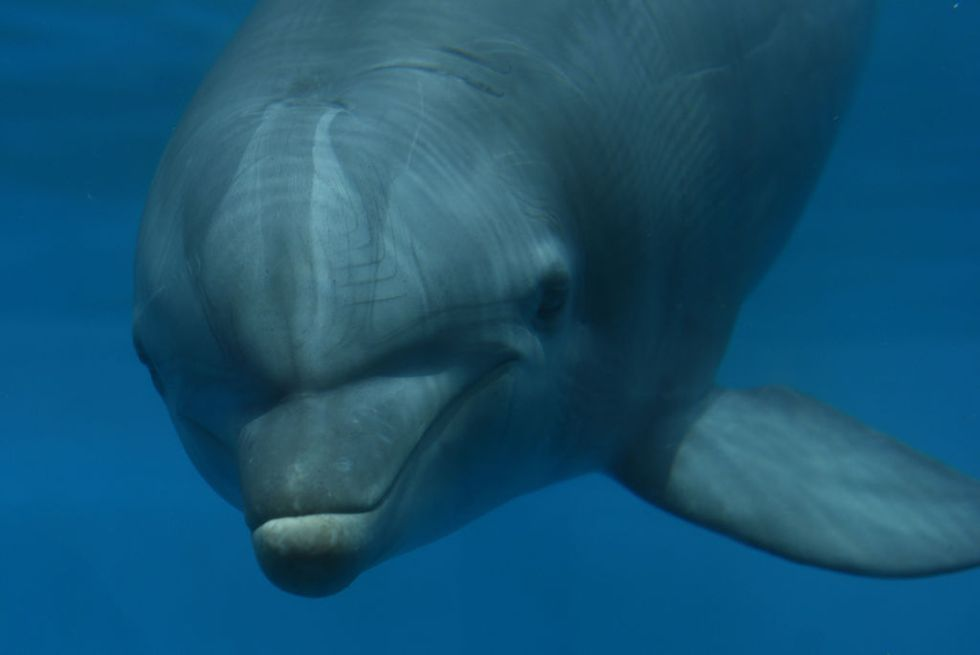 dolphin chilling in a tank lookin all dolphiny thinking about fish and going click-click-click probably