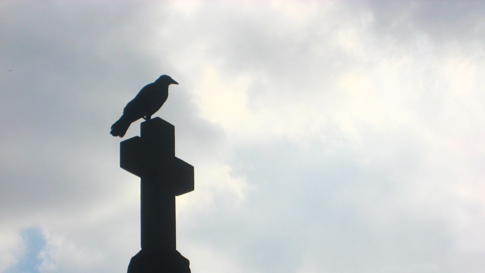 Don't mess with crows. They're intense.