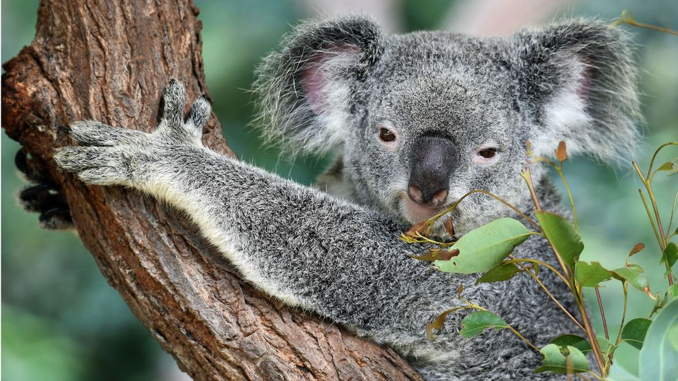 Biodiversity isn't just pretty: it future-proofs our world