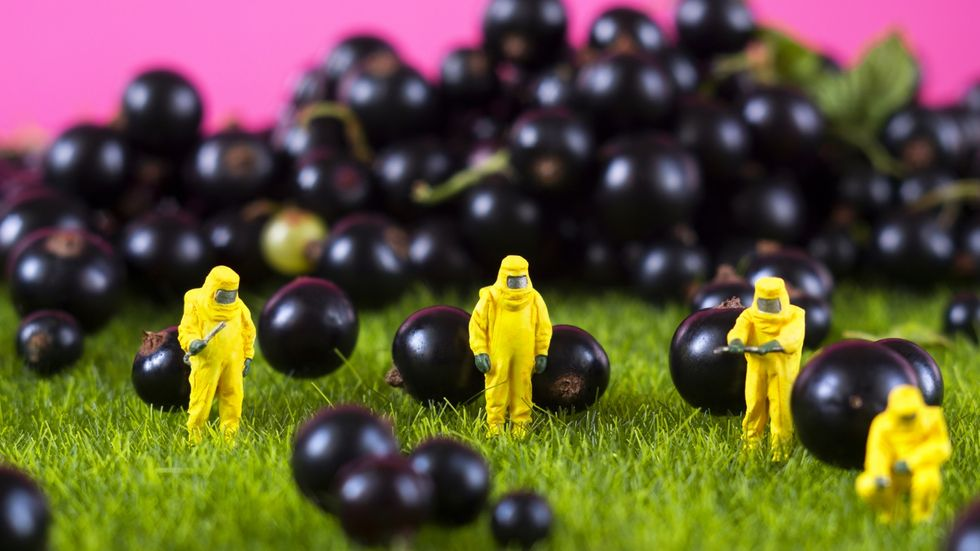 Do we feel like GMO foods are safe yet?