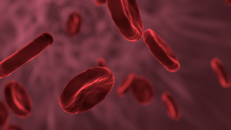 blood cells up close.