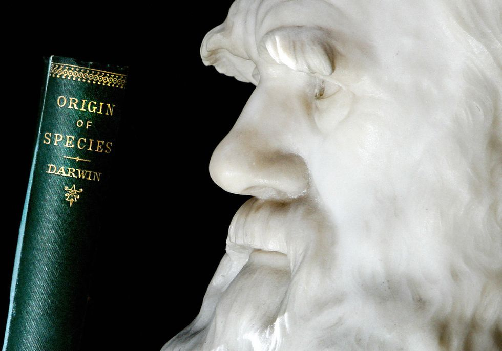 Bust of Darwin and his book, Origin of Species