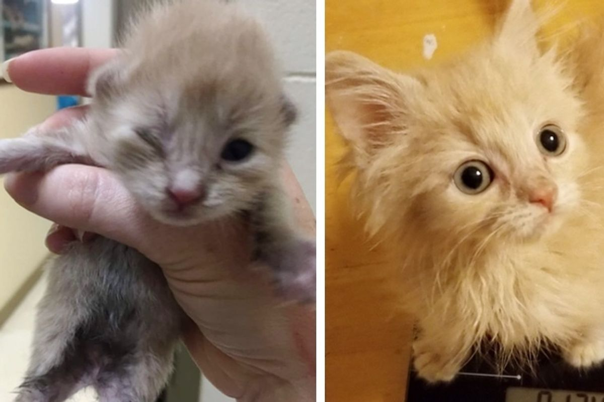 Orphaned Kitten Who Couldn't Grow for a Long Time, Never Gave Up Trying