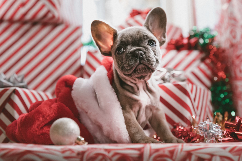 19 Things you WANT To Put on Your Christmas List This Year