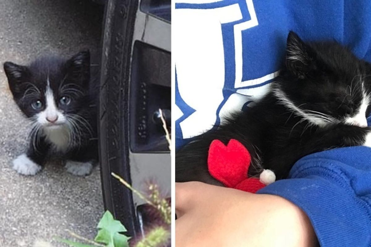 Kitten Who Showed Up in a Backyard, Comes Back to Family for Help