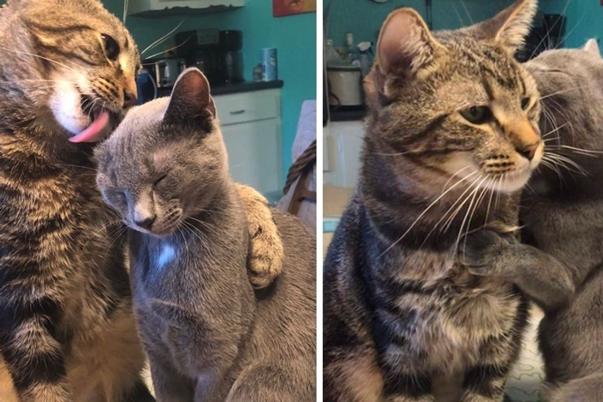Cat Finds Kindred Spirit When He Meets a Kitten In Need of Love