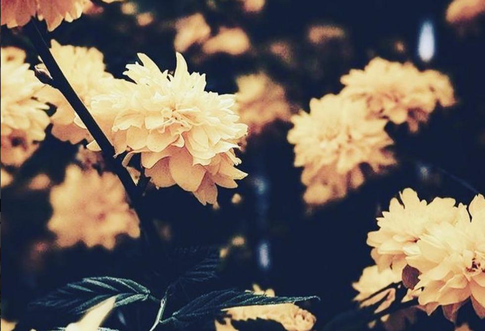 https://www.instagram.com/p/Bpf0vC-nXVn/?tagged=flowers
