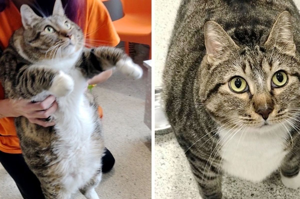 Cat Came to Shelter for a Home and Some Help to Get in Shape